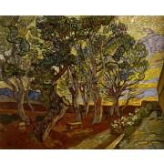 Van Gogh - The Garden of the Asylum in Saint-Remy