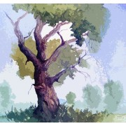 Ραφαήλ - βελανιδιά