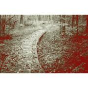 Βόλτα στην εξοχή48